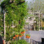 Ansicht Bauerngarten Fritilaria imperialis