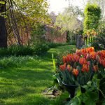Fritilaria imperialis, Tulipa 'Irene Parrot'