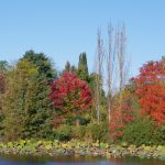 Arboretum Ellerhoop-Thiensen - Indian Summer
