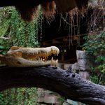 Hagenbeck - Tropenaquarium