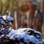 Winteraspekt