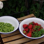 Erdbeeren und Zuckerschoten