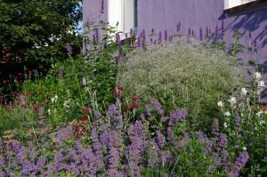 Sommer im Vorgarten