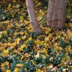 Herbstaspekt