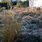 Winteraspekt im Vorgarten