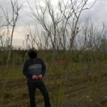 Baumaussuchen in der Baumschule Jurgelucks