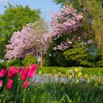 Vorgarten Frühjahr 2016