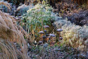 Achnatherum calamagrostis 'Algäu', Sedum telephium 'Herbstfreude', Lavandula; Ruta graveolens, Aster dumosus