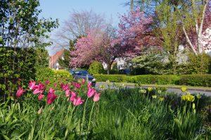 Ansicht Vorgarten, Tulipa 'Mariette', Tulipa 'Spring Green', Tulipa 'Yellow Spring Green'