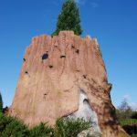 Arboretum Ellerhoop-Thiensen - Sequoiadendron giganteum