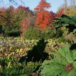 Arboretum Ellerhoop-Thiensen - Lotos